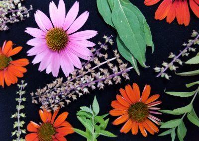 Medicinal Garden Flowers