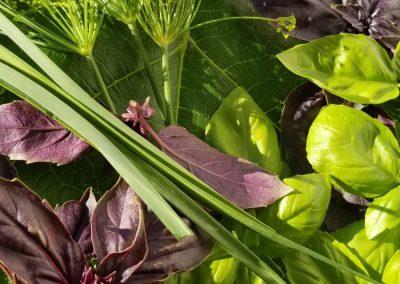 Medicinal Garden Herbs